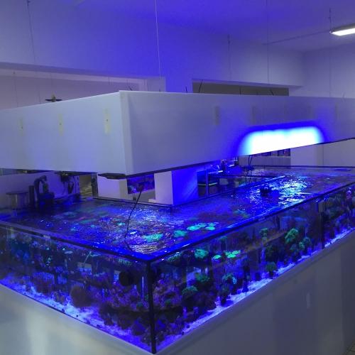 Korallenanlage