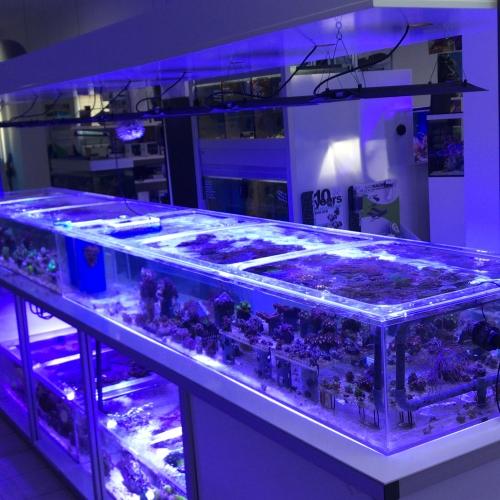 Korallenanlage oben