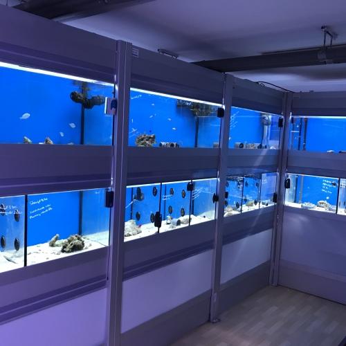 Fischhanlage unten