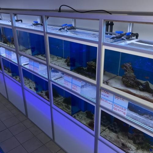 Fischhanlage oben